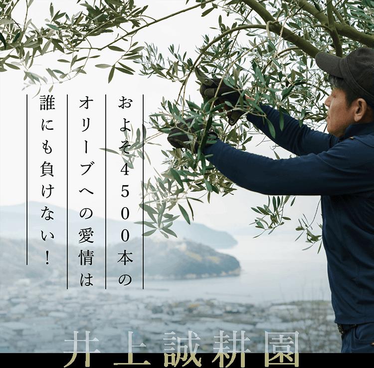 井上誠耕園|およそ4500本のオリーブへの愛情は誰にも負けない!